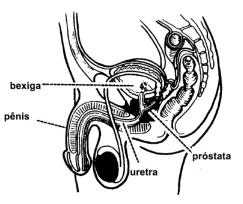 medicamento de próstata omnicarena